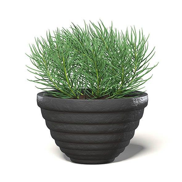 Plant in Black Pot 3D Model - 3DOcean Item for Sale