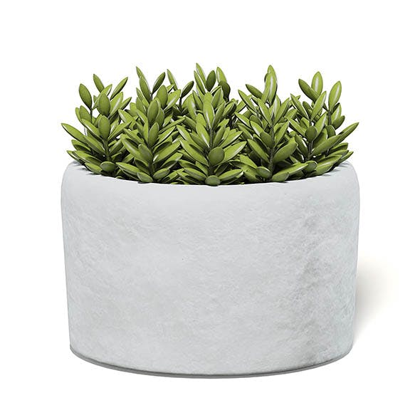 Plant in Stone Pot 3D Model - 3DOcean Item for Sale