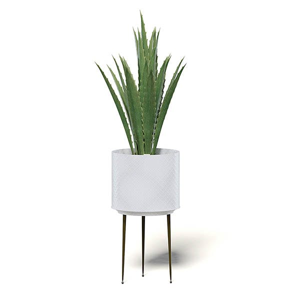 Aloe in White Pot 3D Model