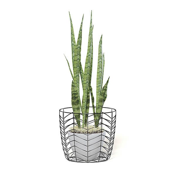 Snake Plant 3D Model in White Pot - 3DOcean Item for Sale
