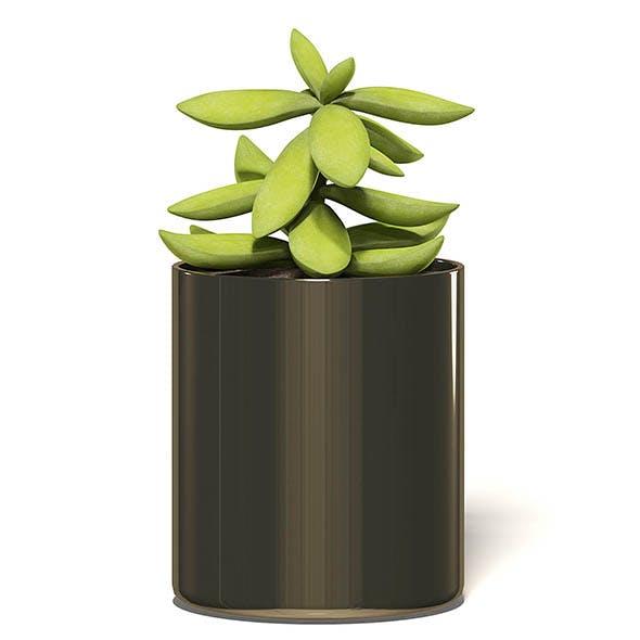 Plant 3D Model in Metal Pot - 3DOcean Item for Sale