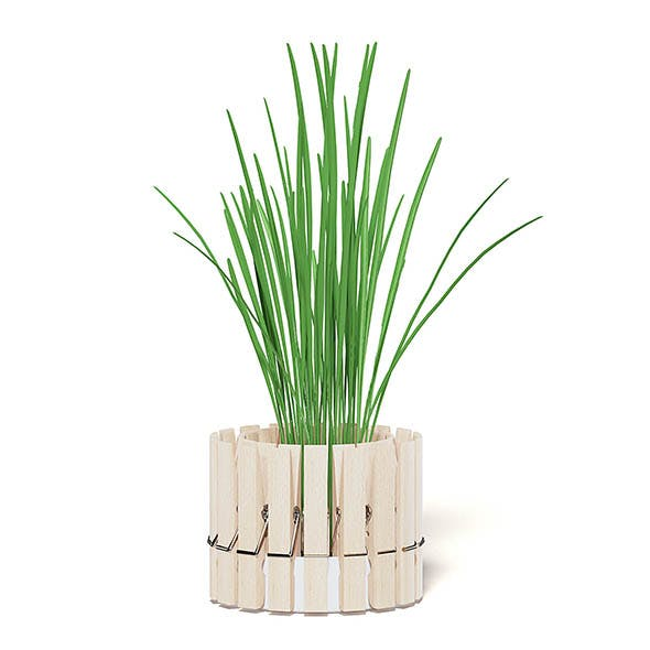 Plant 3D Model with Clothes Peg Pot - 3DOcean Item for Sale