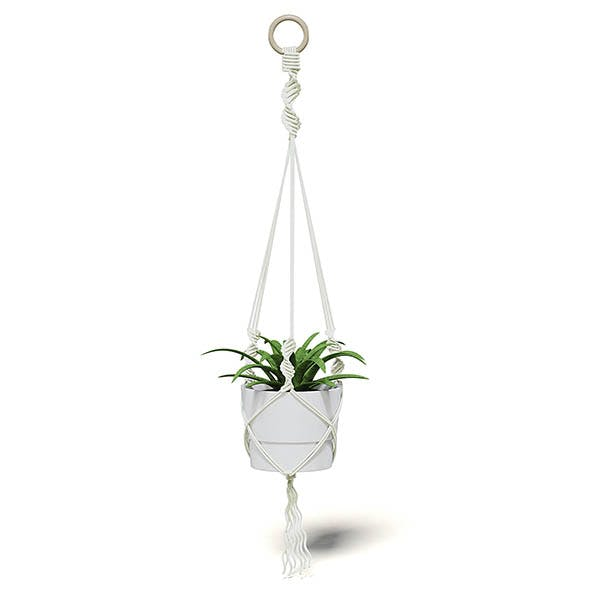 Plant in White Hanging Pot 3D Model - 3DOcean Item for Sale