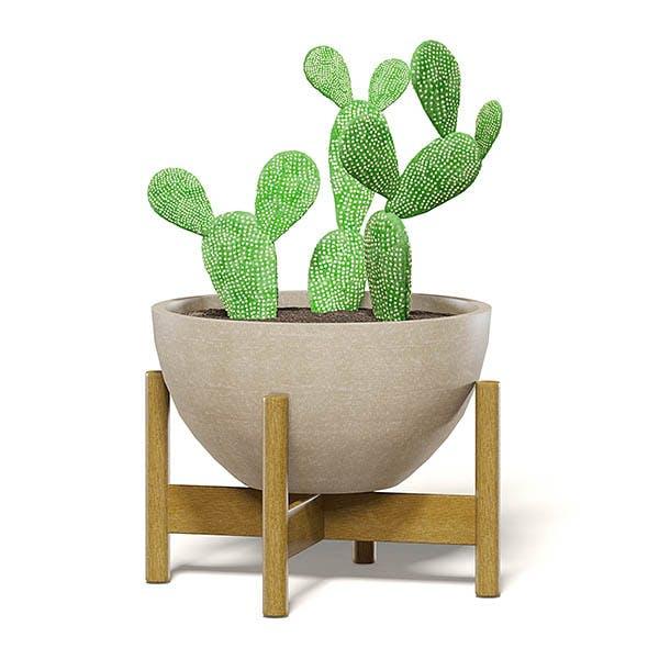 Cactus 3D Model in Brown Pot