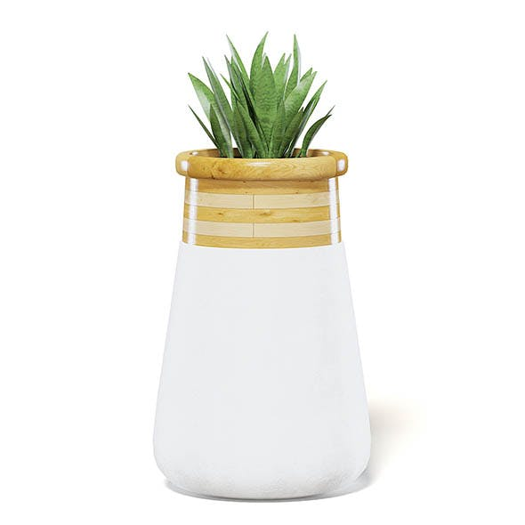 Plant 3D Model in Large Modern Pot - 3DOcean Item for Sale