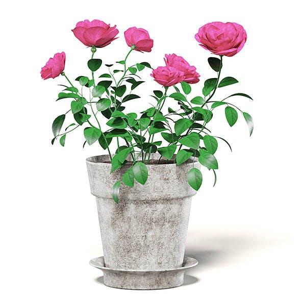 Pink Roses 3D Model in Ceramic Pot - 3DOcean Item for Sale