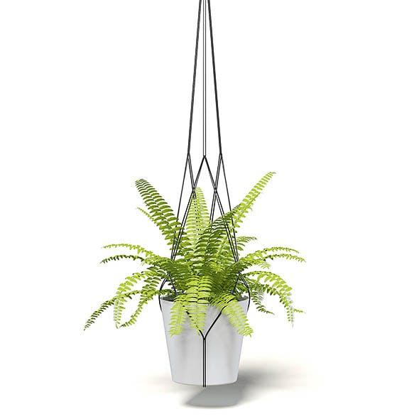 Fern 3D Model in Hanging Pot - 3DOcean Item for Sale