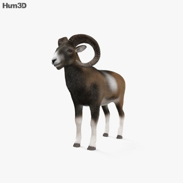 Mouflon HD - 3DOcean Item for Sale