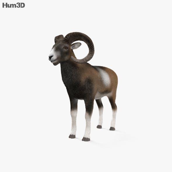 Mouflon HD