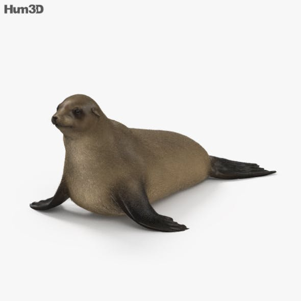 Brown Fur Seal HD - 3DOcean Item for Sale
