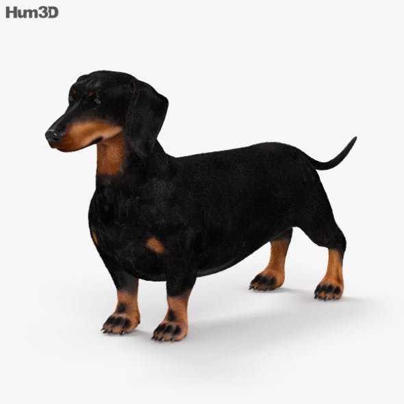Dachshund HD - 3DOcean Item for Sale