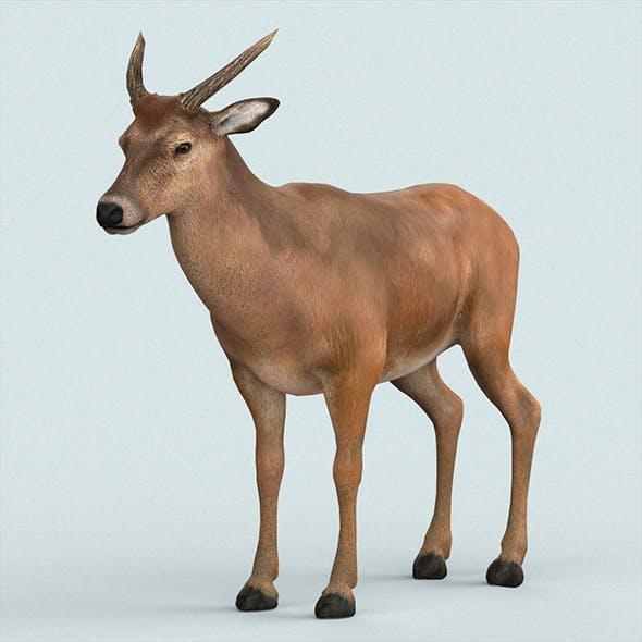 Realistic Wollaton Deer