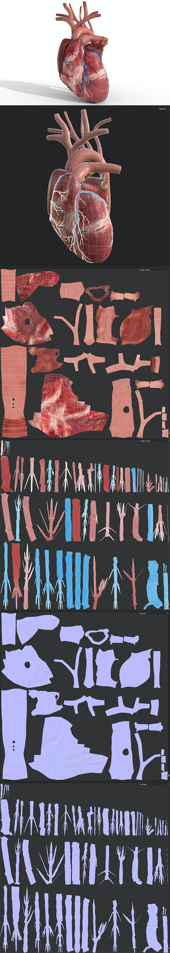 Human Heart animated - 3DOcean Item for Sale