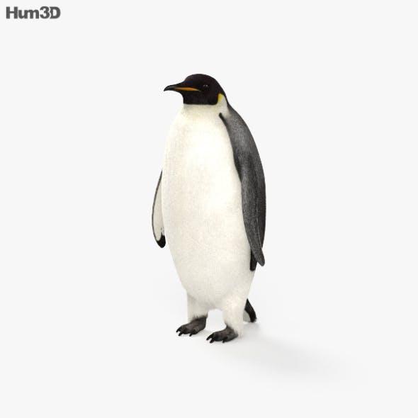 Emperor Penguin HD - 3DOcean Item for Sale
