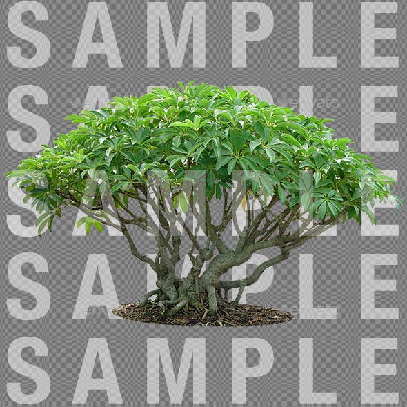 Tropical Plant with Transparency - 3DOcean Item for Sale