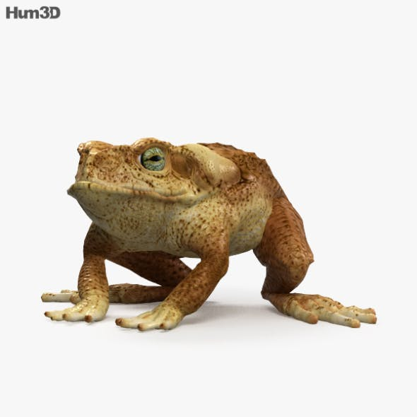 Cane Toad HD - 3DOcean Item for Sale
