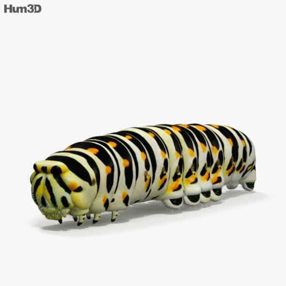 Caterpillar HD - 3DOcean Item for Sale
