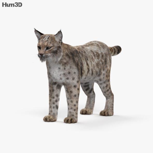 Bobcat HD