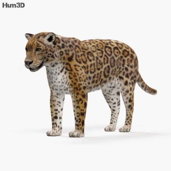 Jaguar HD - 3DOcean Item for Sale