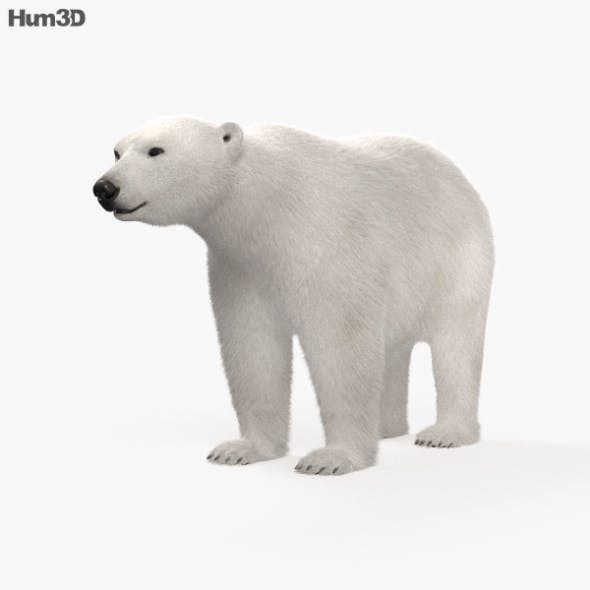 Polar Bear HD - 3DOcean Item for Sale