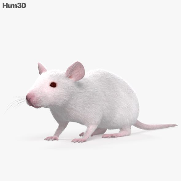 Mouse White HD