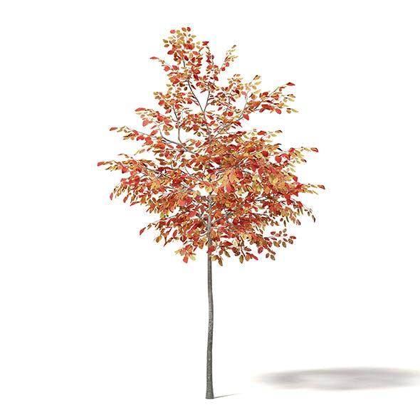 Alder 3D Model 2.3m - 3DOcean Item for Sale