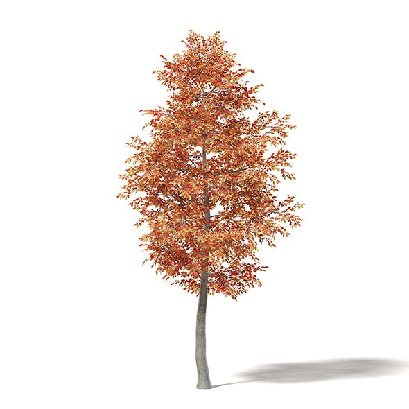 Alder 3D Model 5.8m - 3DOcean Item for Sale