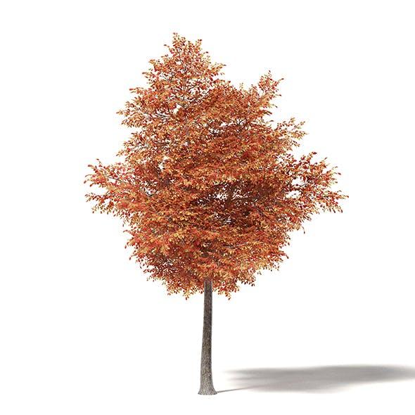 Alder 3D Model 6.7m - 3DOcean Item for Sale