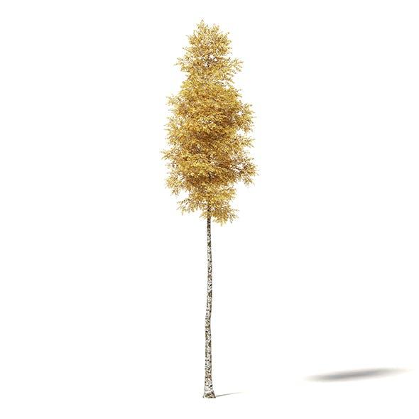 Silver Birch 3D Model 14.5m - 3DOcean Item for Sale