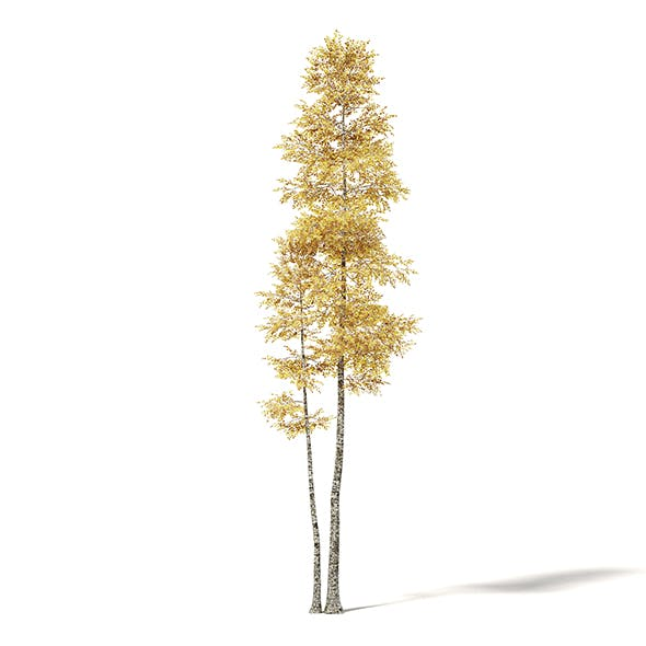 Silver Birch 3D Model 11m - 3DOcean Item for Sale