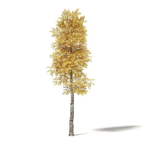 Silver Birch 3D Model 8.5m