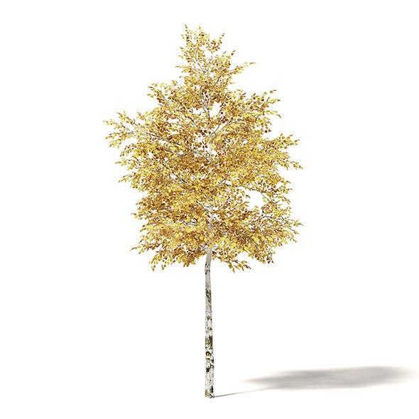 Silver Birch 3D Model 4.2m