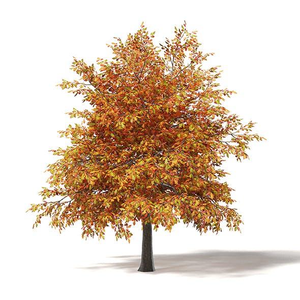Common Oak 3D Model 4.5m - 3DOcean Item for Sale