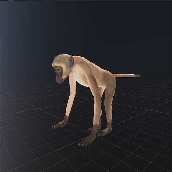 Realistic Monkey - 3DOcean Item for Sale