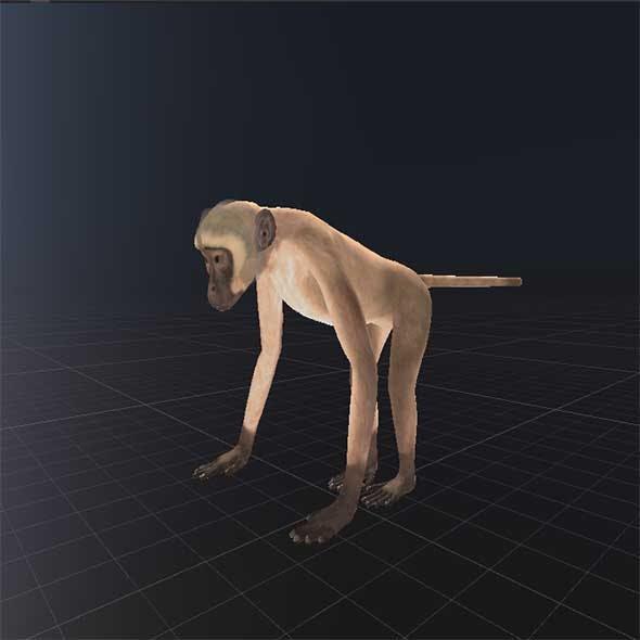 Realistic Monkey