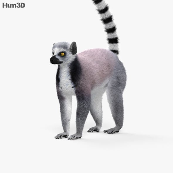 Ring-Tailed Lemur HD - 3DOcean Item for Sale