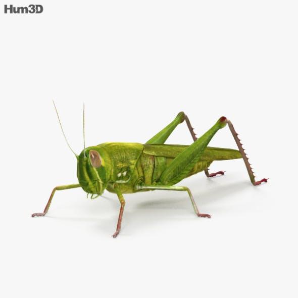 Grasshopper HD
