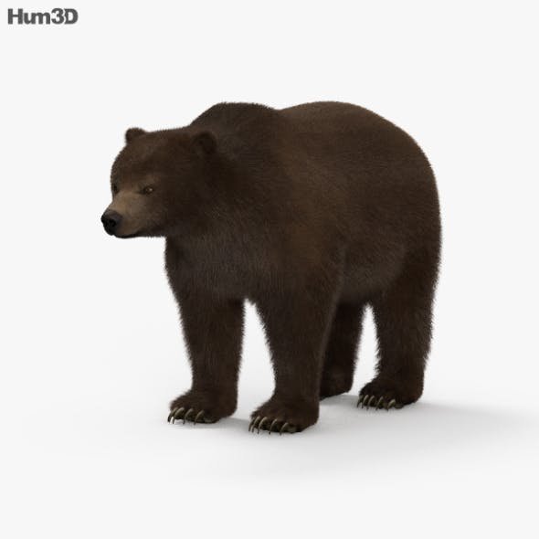 Grizzly Bear HD - 3DOcean Item for Sale