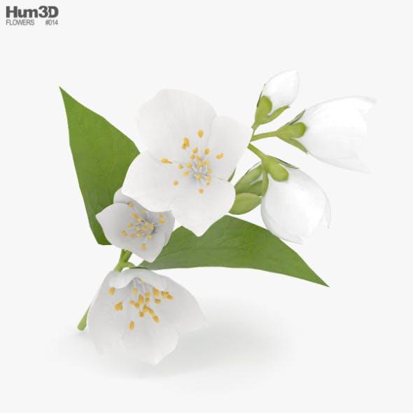 Jasmine - 3DOcean Item for Sale