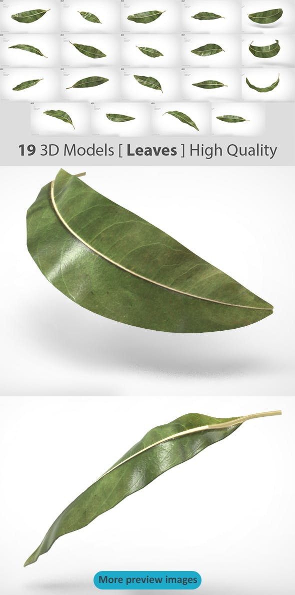19 Model of Leaves - Very high quality - 3DOcean Item for Sale