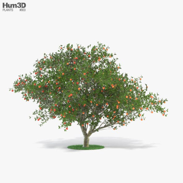 Apple Tree - 3DOcean Item for Sale