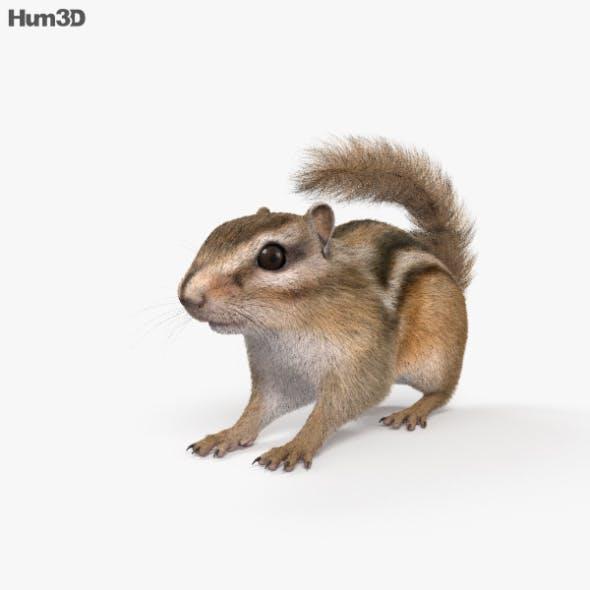 Chipmunk HD