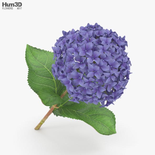 Hydrangea - 3DOcean Item for Sale