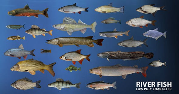 River fish Low-poly 3D model - 3DOcean Item for Sale