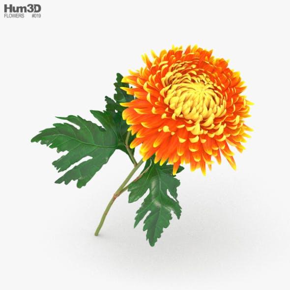 Chrysanthemum - 3DOcean Item for Sale