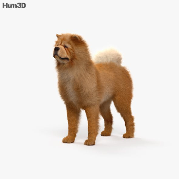 Chow Chow HD - 3DOcean Item for Sale