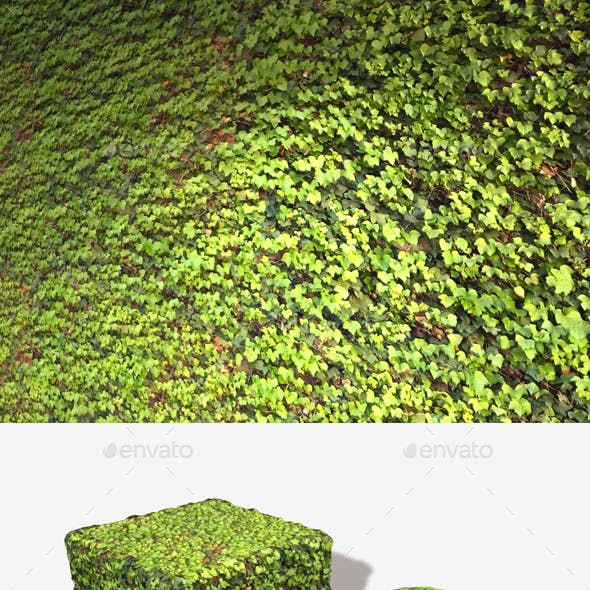 Bright Ivy Wall Seamless Texture
