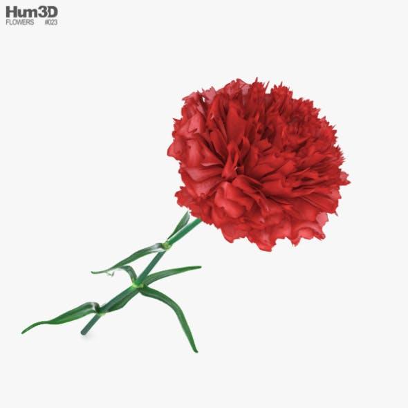 Carnation - 3DOcean Item for Sale