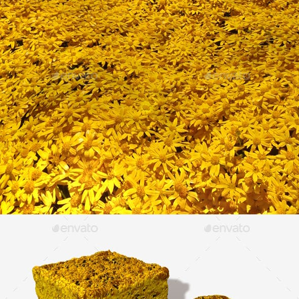Yellow Desert Flowers Seamless Texture