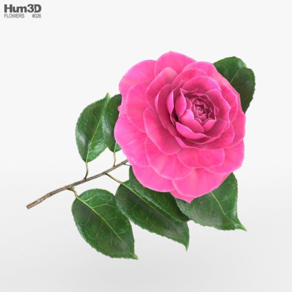 Camellia - 3DOcean Item for Sale